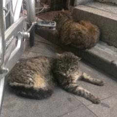 猫とお昼寝