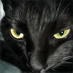 黒猫スーモ🐱(はやかけん)
