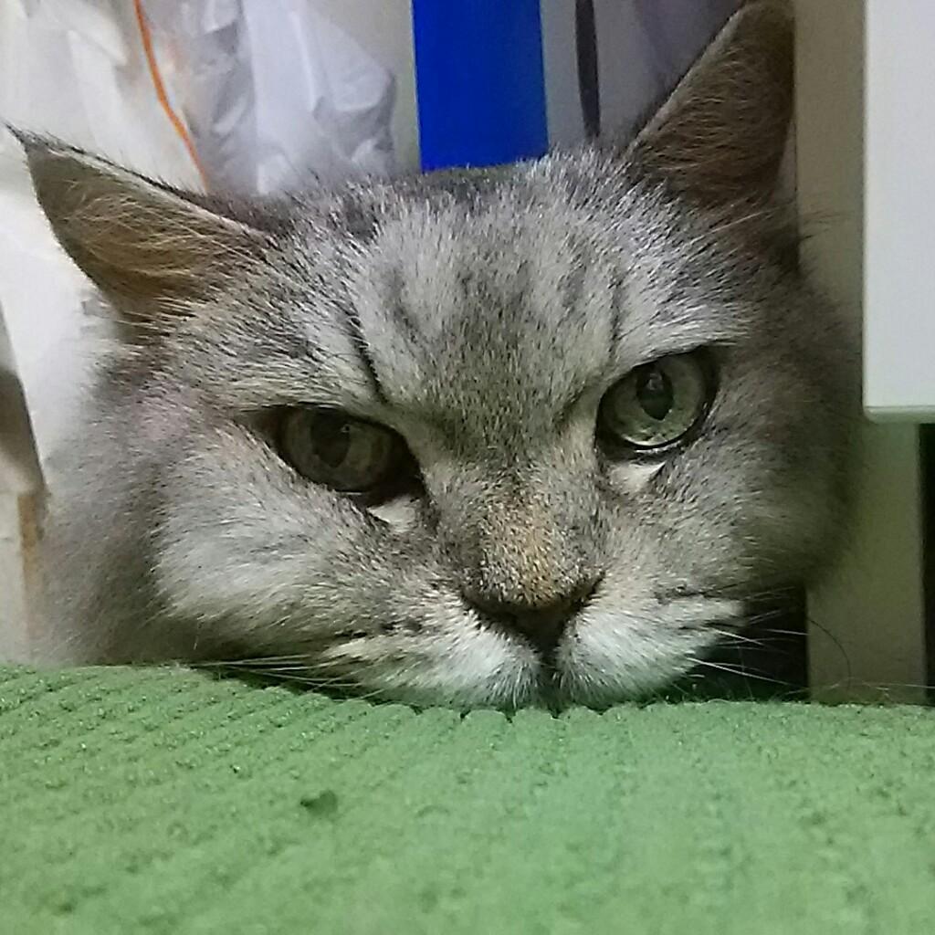 夢見る マサにゃん (^o^)v